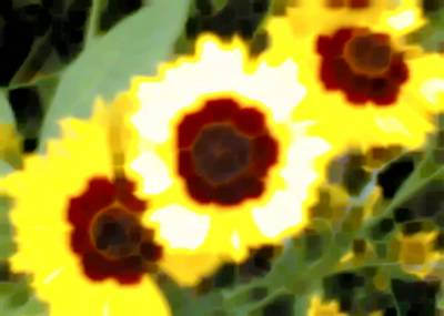 Sonya's Flowers (2-15-05)