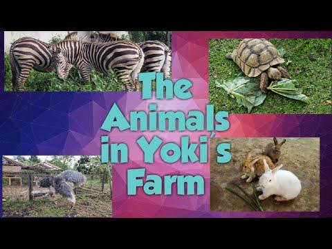 Yoki's Farm
